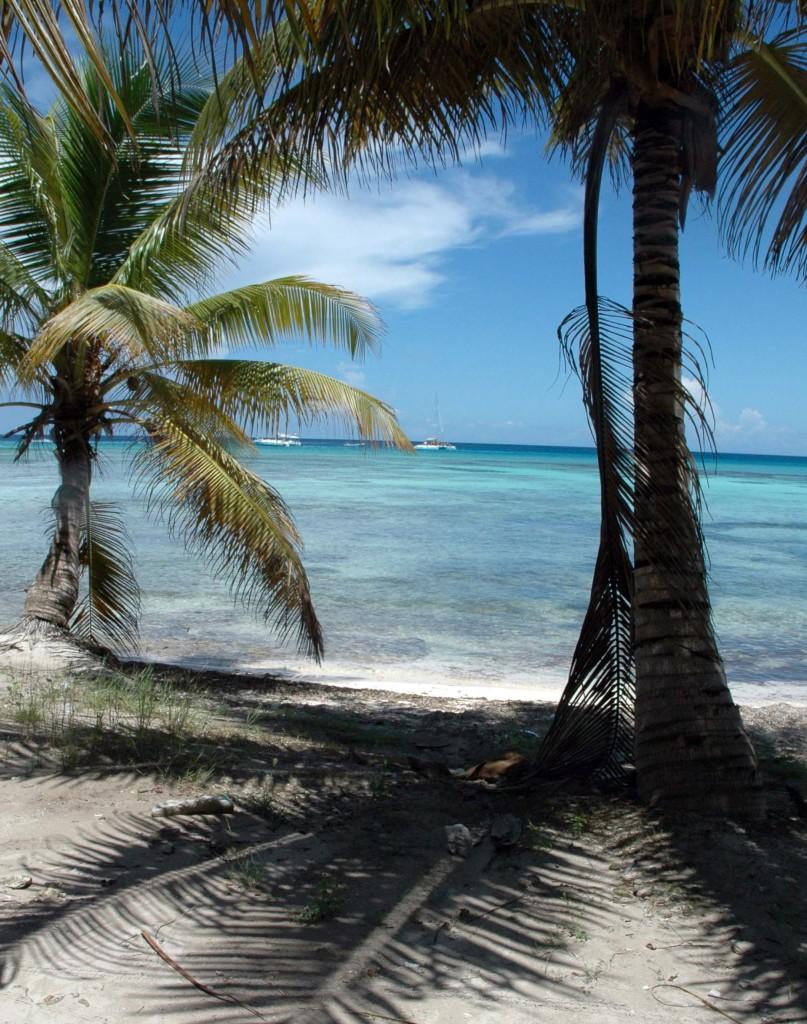 isola di saona relax palme