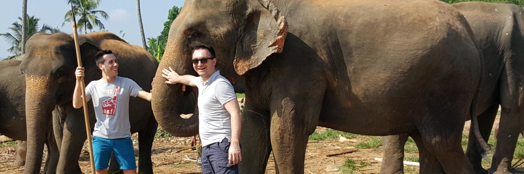 elefanti pinnawala sri lanka tusoperator