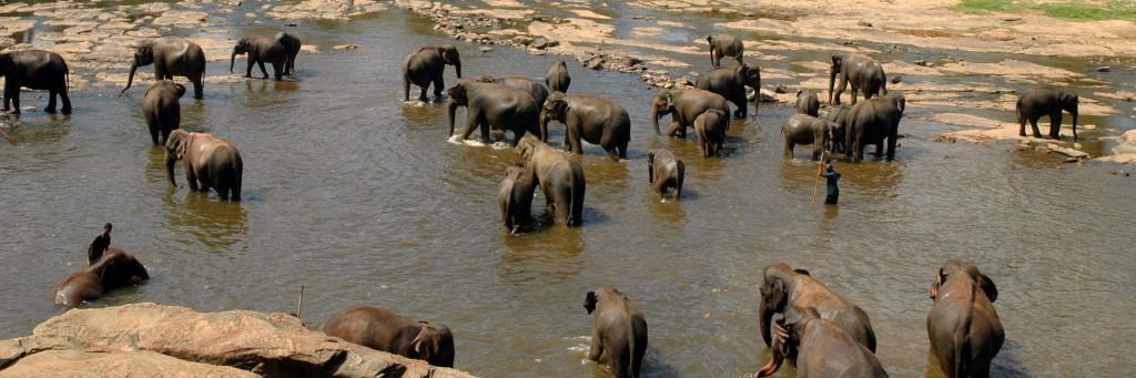 orfanotrofio pinnawala elefanti bagno tusoperator