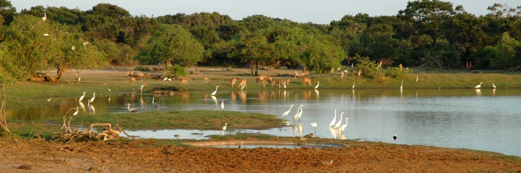parco yala safari tusoperator