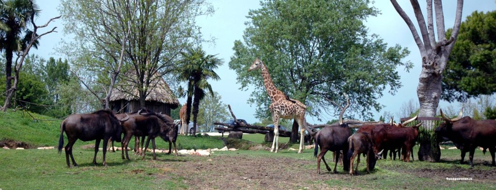 Visita al Parco Natura Viva di Bussolengo
