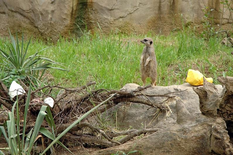 parco natura viva di bussolengo_zoo safari a verona