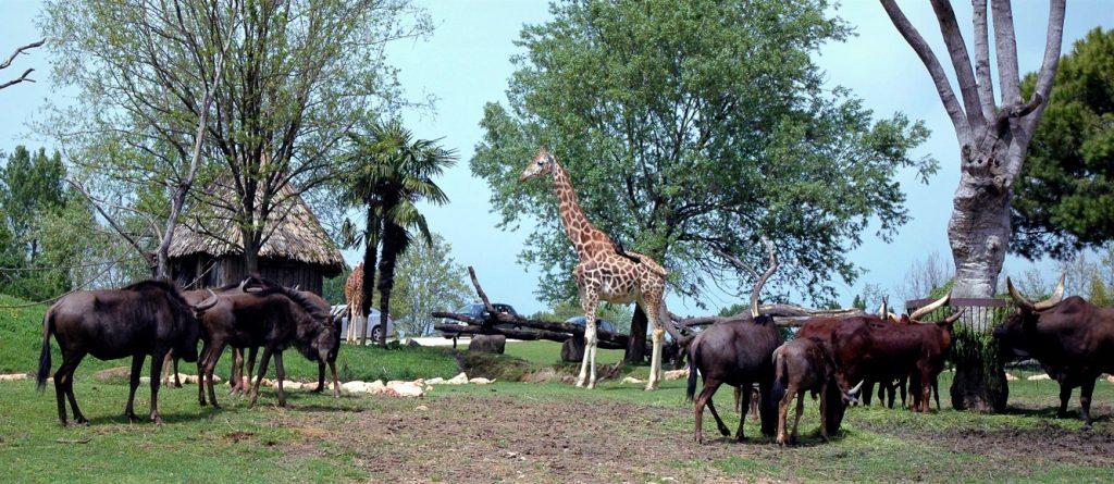gli animali durante il safari al parco natura viva di verona
