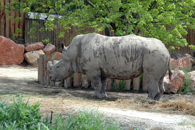 rinoceronte nel parco natura viva di bussolengo_verona