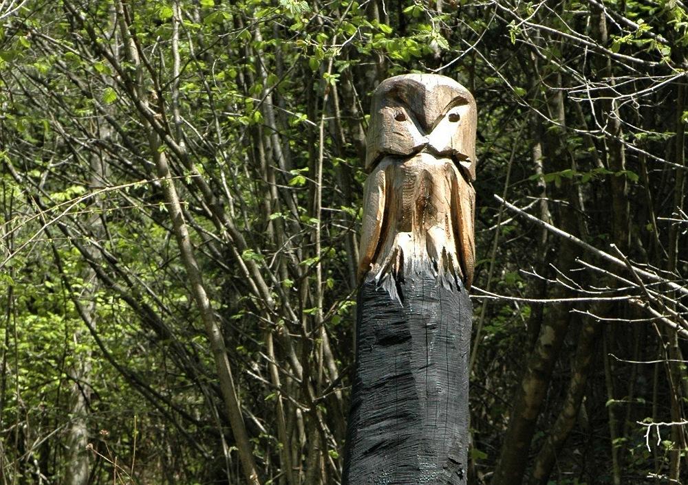 gufi di legno nel bosco_zone_brescia