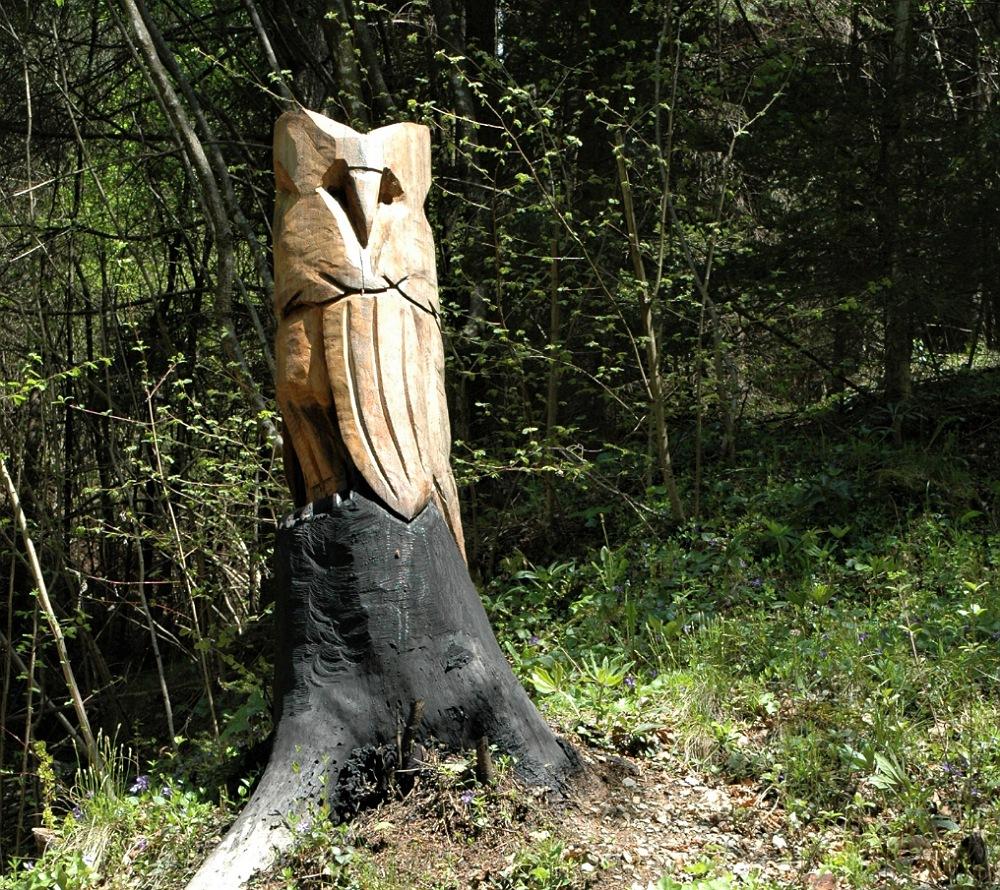 un gufo nel bosco degli gnomi di zone