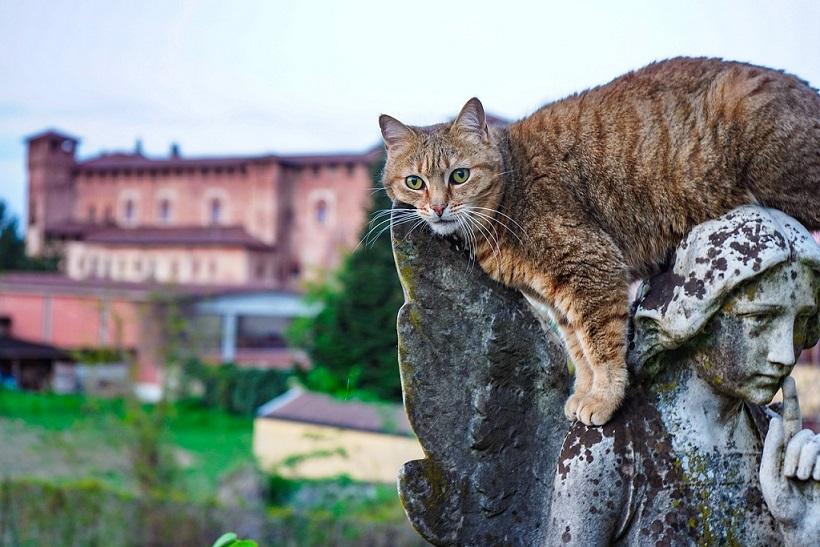 gatto e castello di sant'angelo lodigiano