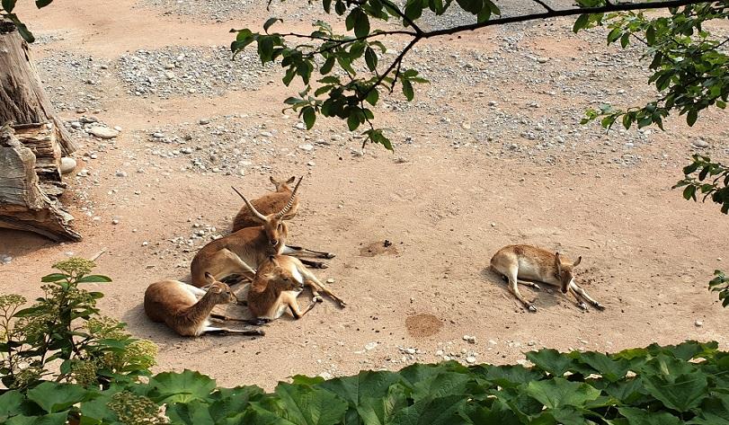 zoo di bergamo_area tematica savana_parco cornelle