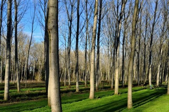 parco_pizzighettone_tenuta del boscone