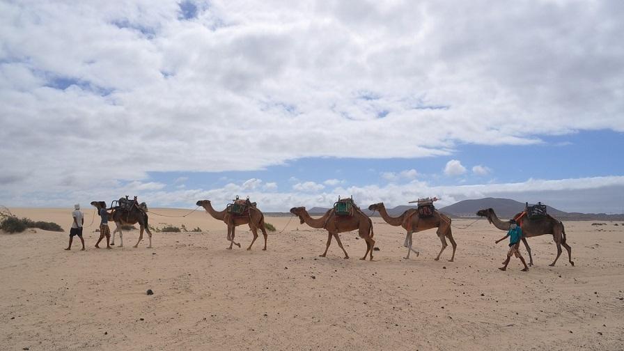 cosa fare e cosa vedere a fuerteventura_escursione in cammello