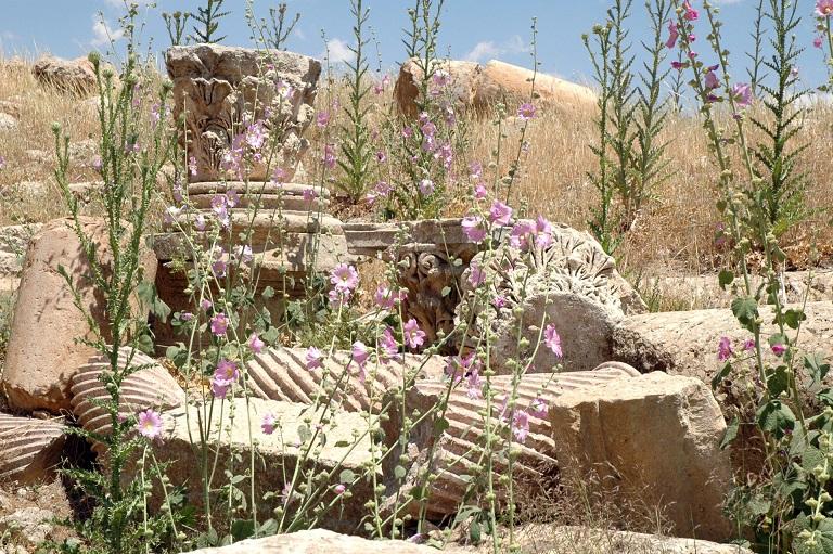 colonne e rovine a Jerash_città romana in giordania