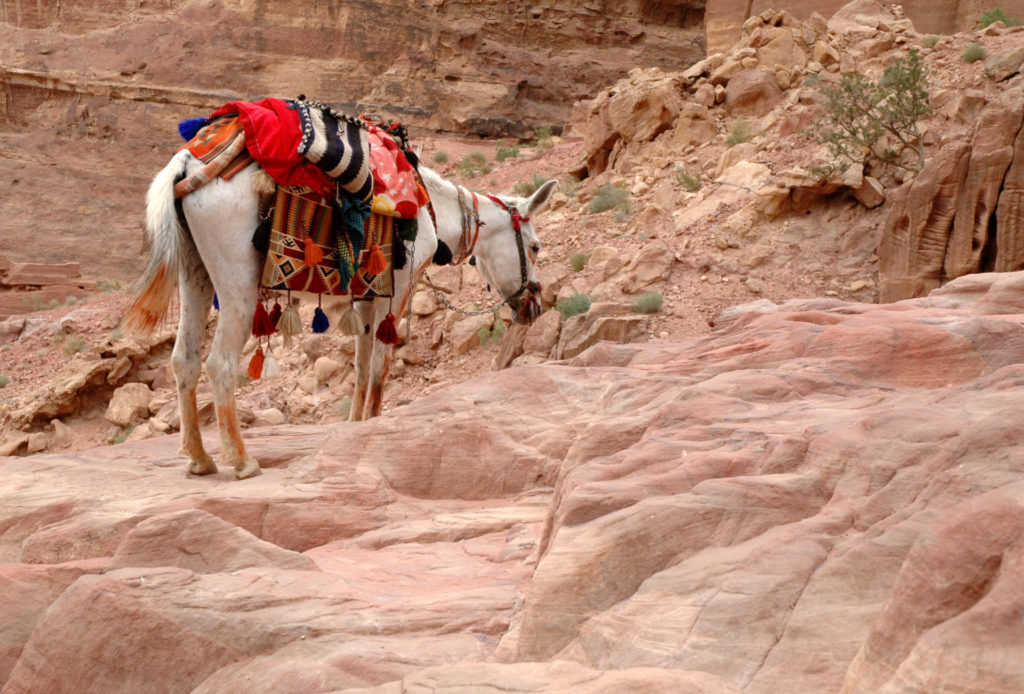 Asini a Petra: itinerario a piedi