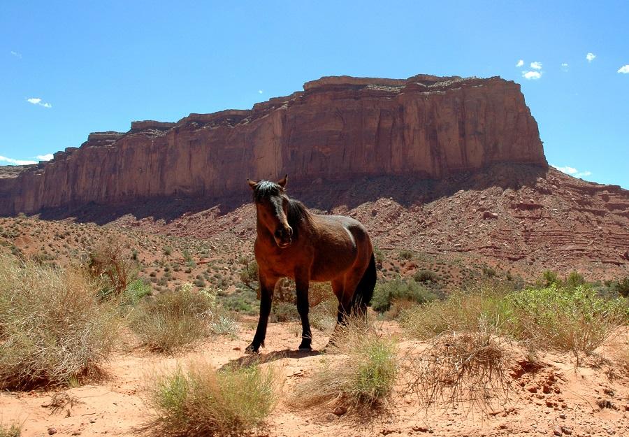 Un cavallo selvatici nella Monument Valley