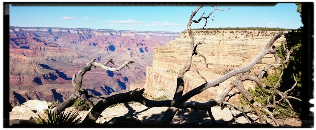 Grand Canyon: cosa vedere tra i parchi nazionali degli USA Occidentali