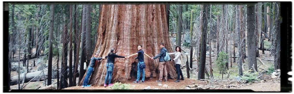 Le sequoie di Mariposa Grove: parchi USA Occidentali