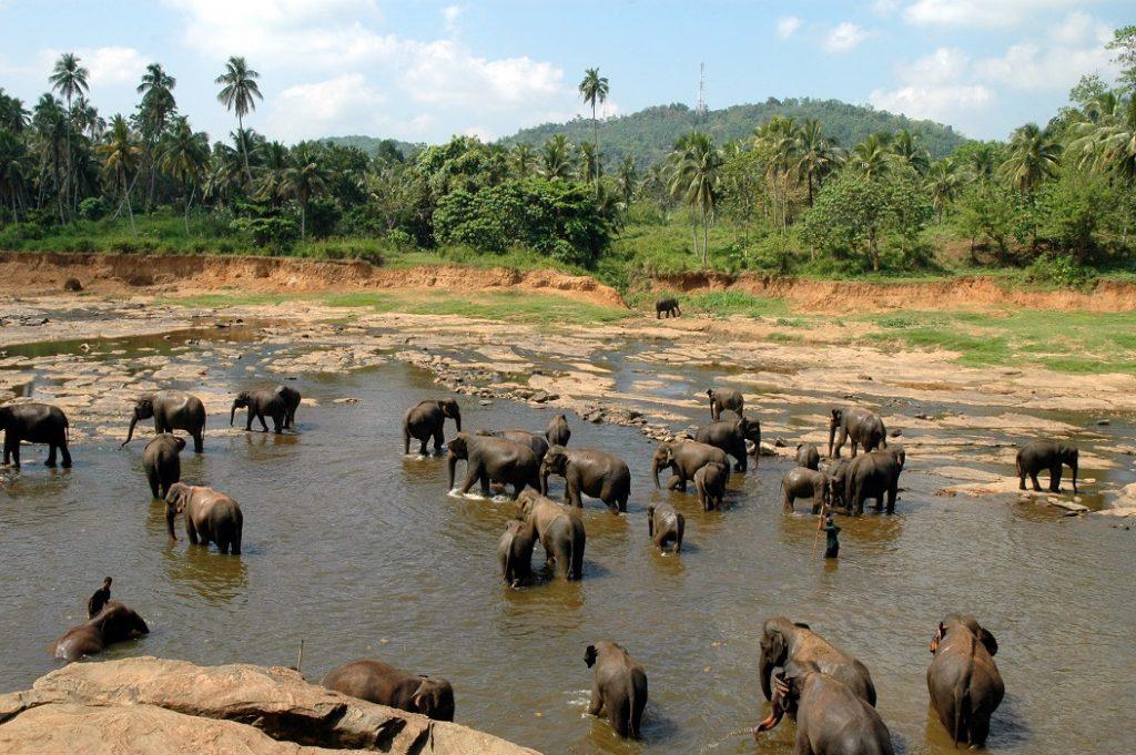 Gli elefanti dell'Orfanotrofio di Pinnawala: cosa vedere in Sri Lanka