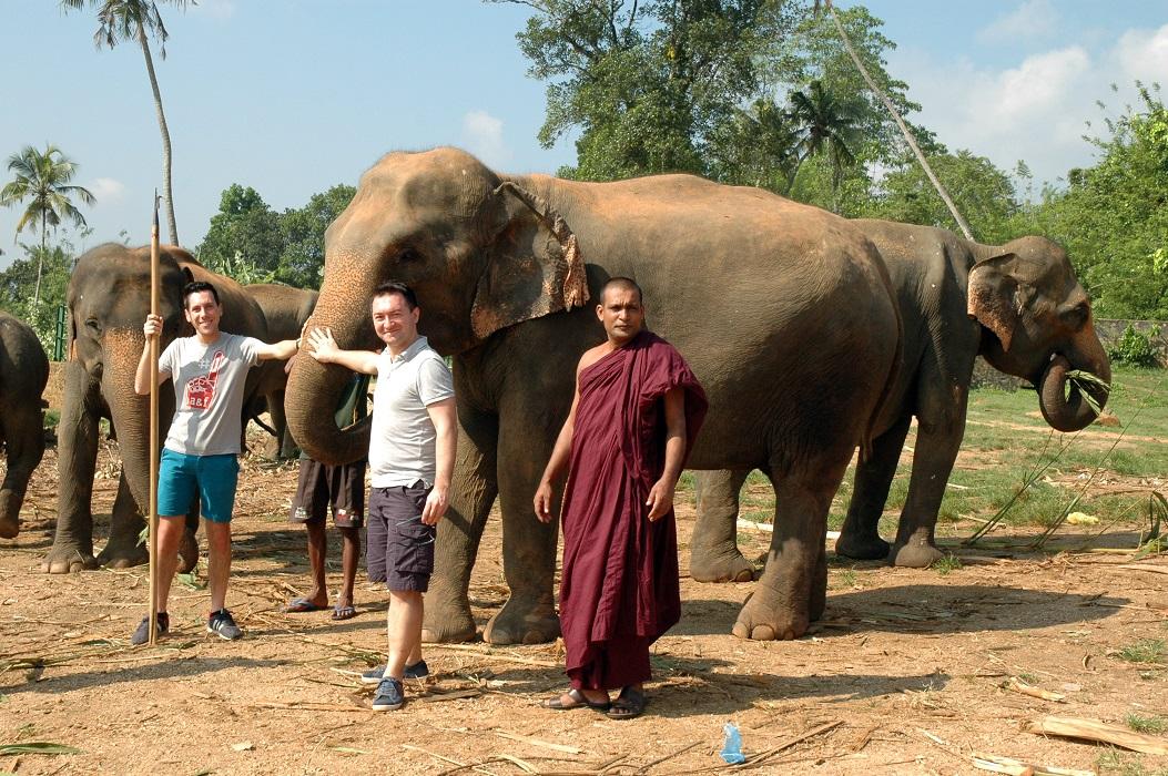 Gli elefanti di Pinnawala in Sri Lanka