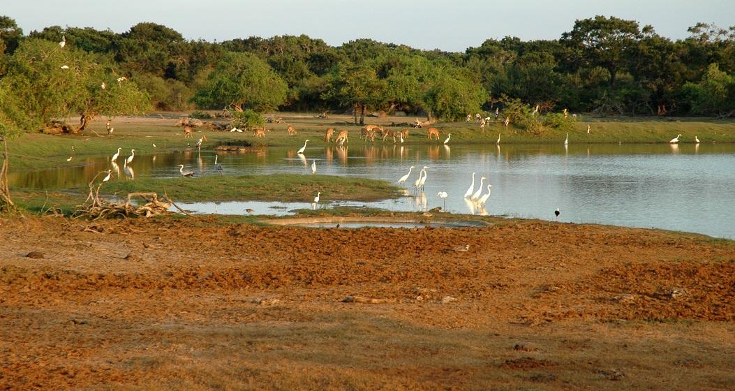 Il Parco Nazionale di Yala in Sri Lanka
