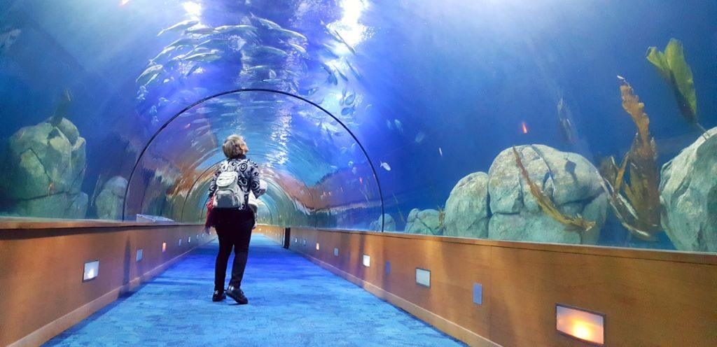 La galleria con gli squali nell'Oceanografic di Valencia