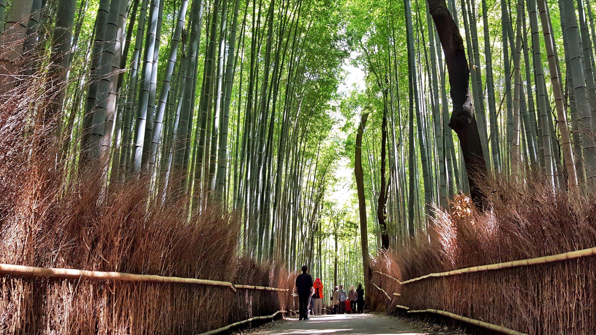 DIARIO DI VIAGGIO GIAPPONE foresta bamboo