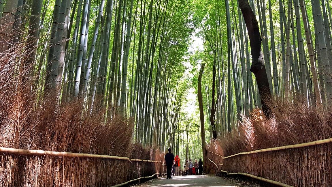 Bosco di Bamboo ad Arashiyama_Kyoto_itinerario di viaggio in Giappone