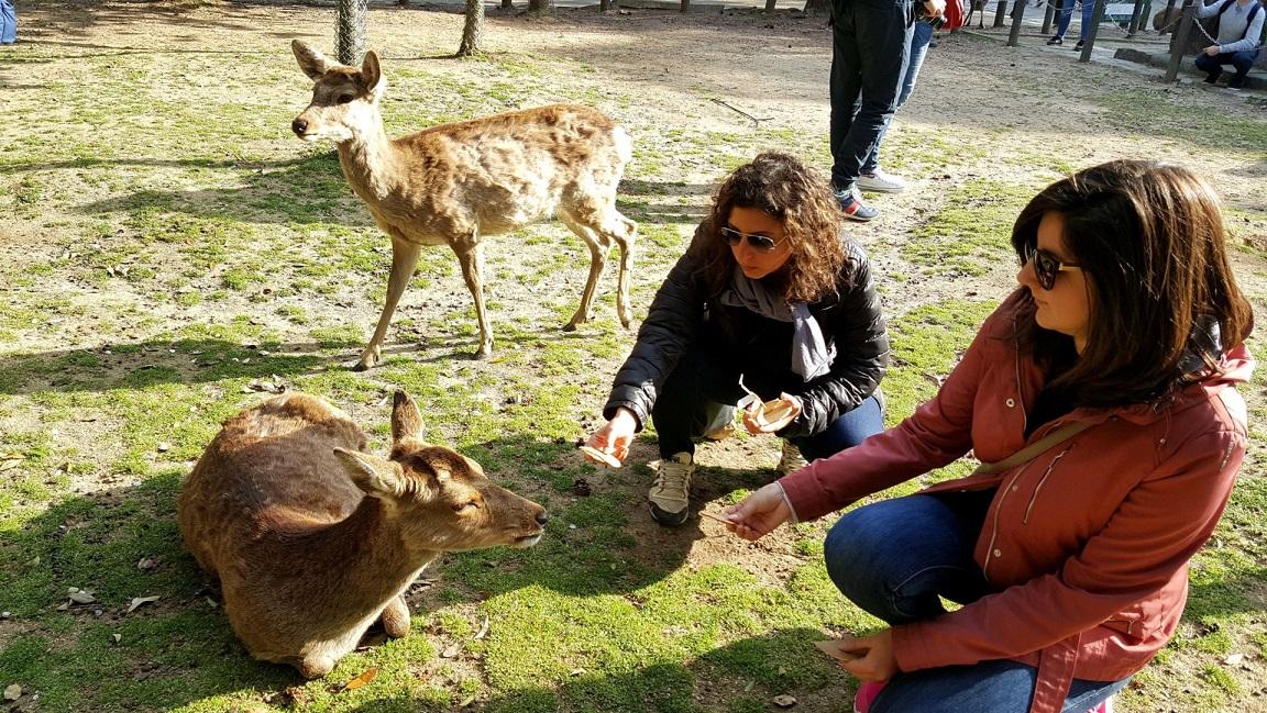 I cerbiatti di Nara_itinerario in giappone 10 giorni
