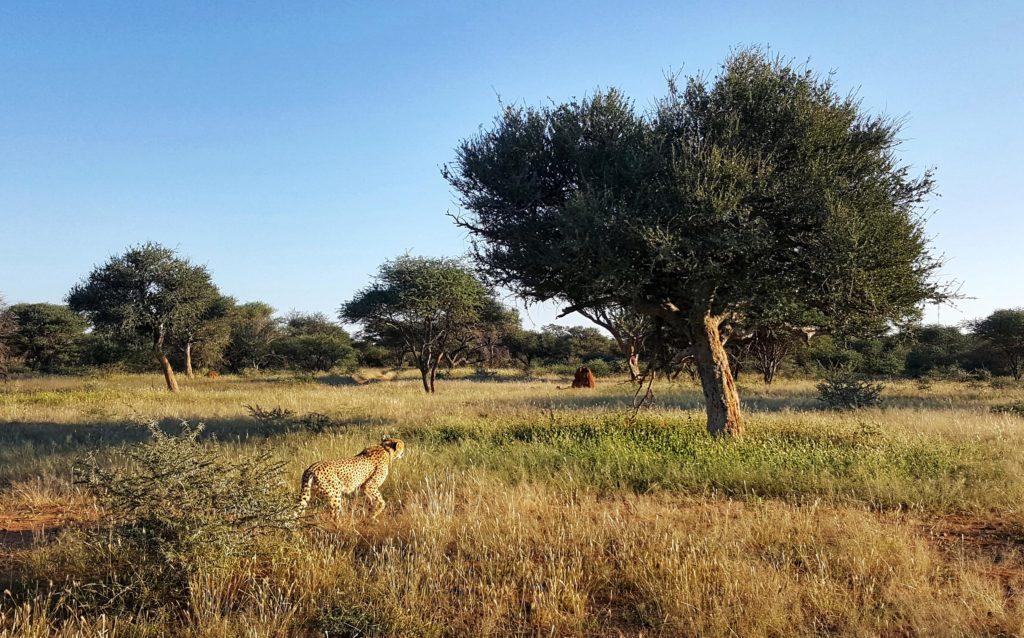 organizzare un viaggio in namibia_quando andare_periodo migliore
