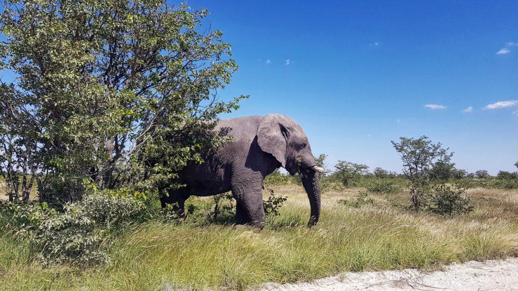 viaggio namibia 12 giorni_Elefante nell'Etosha National Park