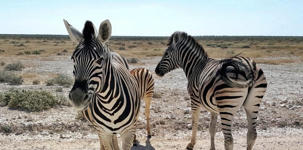 namibia 12 giorni