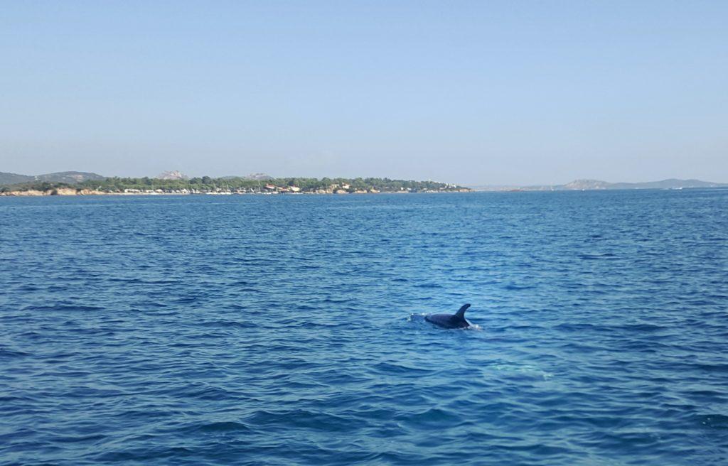 delfini arcipelago maddalena in barca o gommone