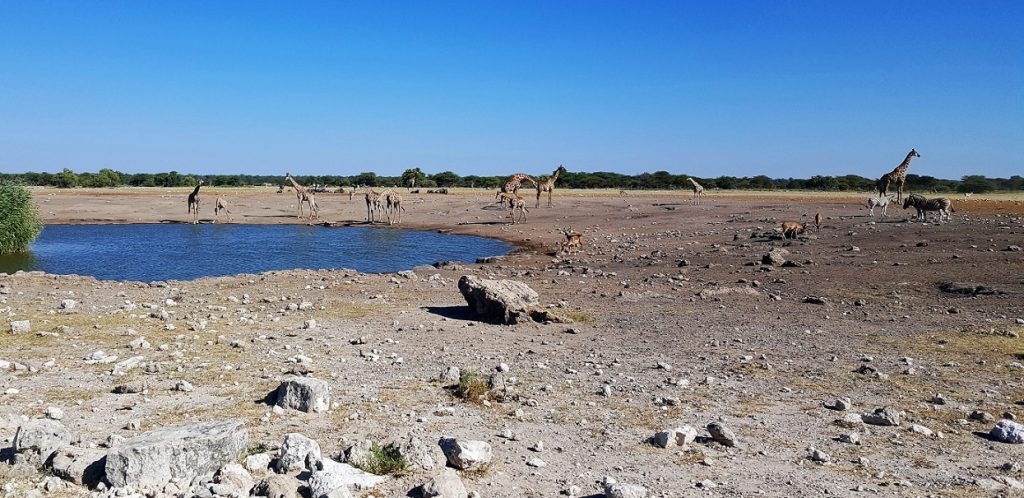 diario di viaggio in namibia_etosha
