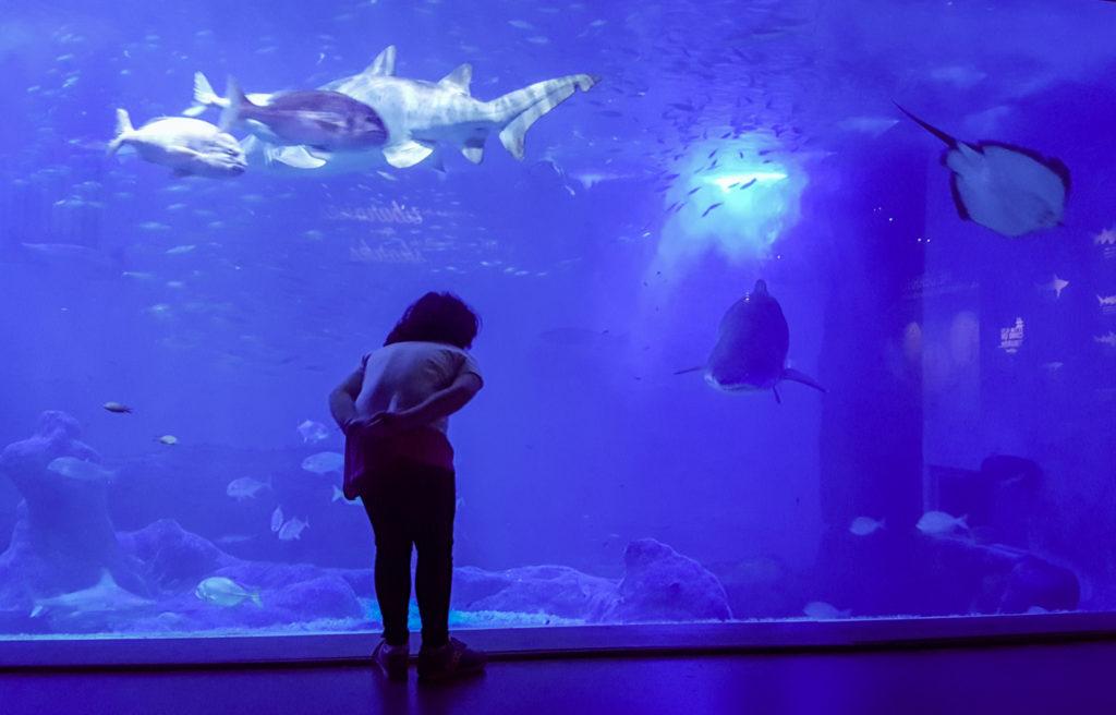 acquario di siviglia_bambini_cosa vedere