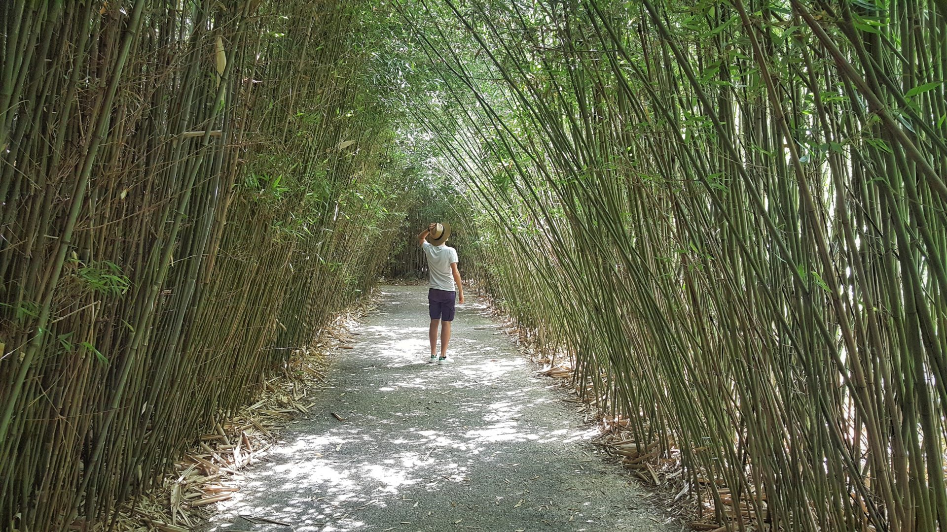 labirinto di parma in italia