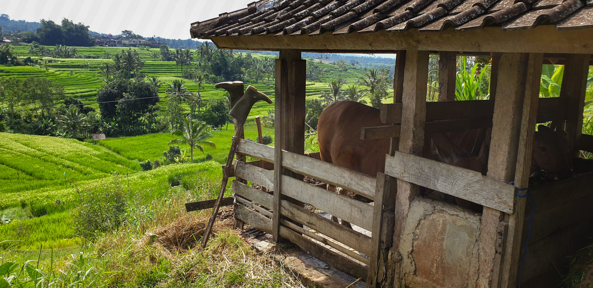 risaie di Bali patrimonio Unesco