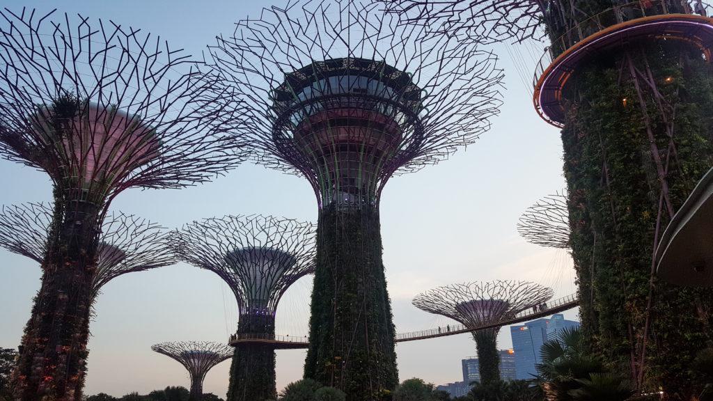cosa visitare a singapore_Skyway tra gli alberi dei Gardens by The Bay