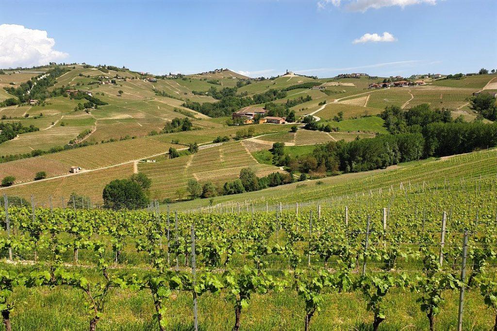 il paesaggio delle langhe con viti e borghi_cosa vedere in due giorni