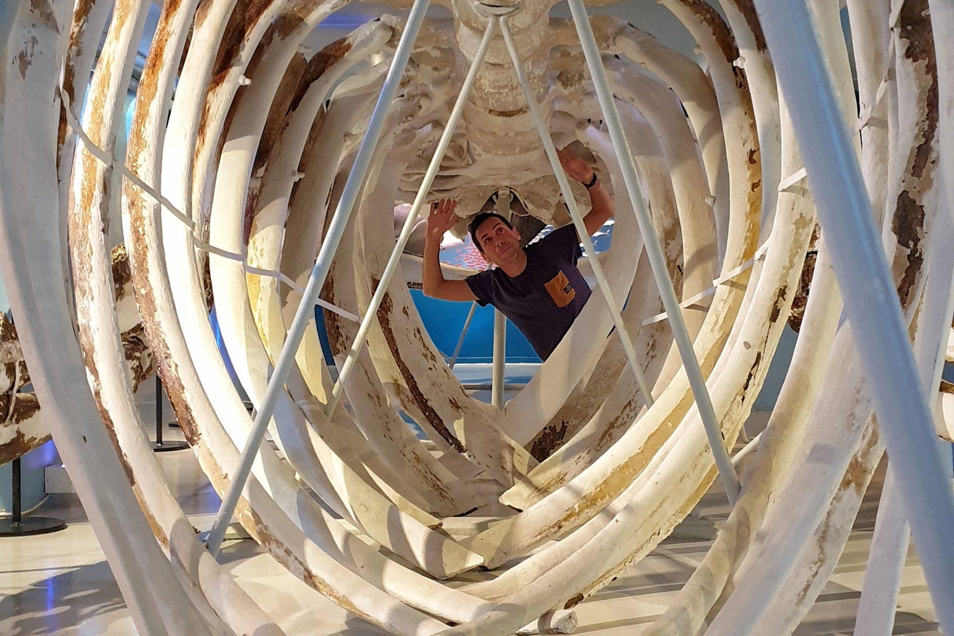 cosa fare a sandefjord museo