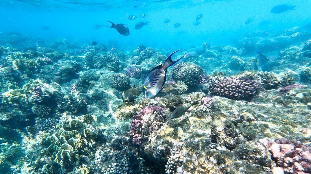barriera corallina ras mohamed escursione via terra