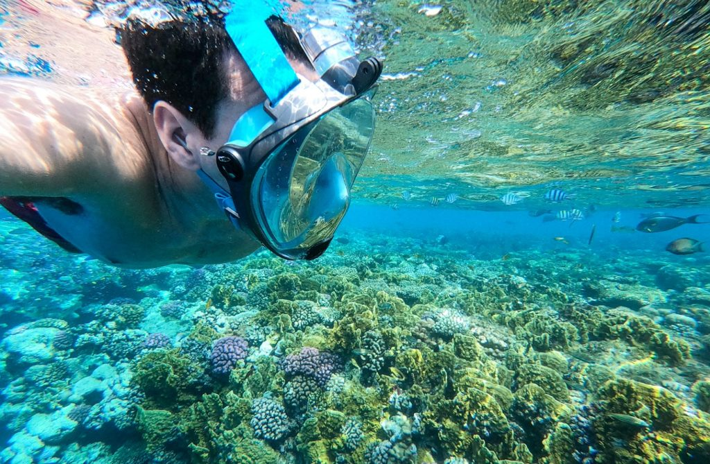 ras mohammed barriera corallina cosa vedere