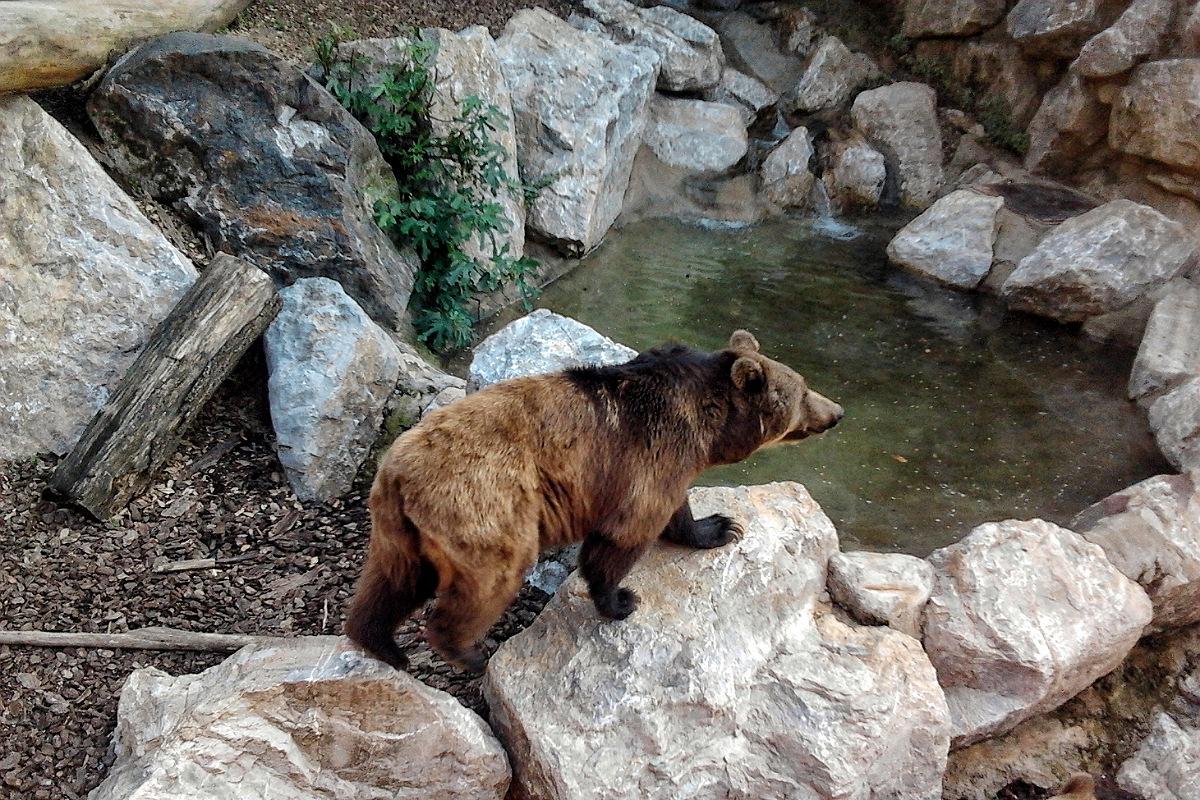 bergamo cosa fare giornata sole estate primavera zoo parco cornelle