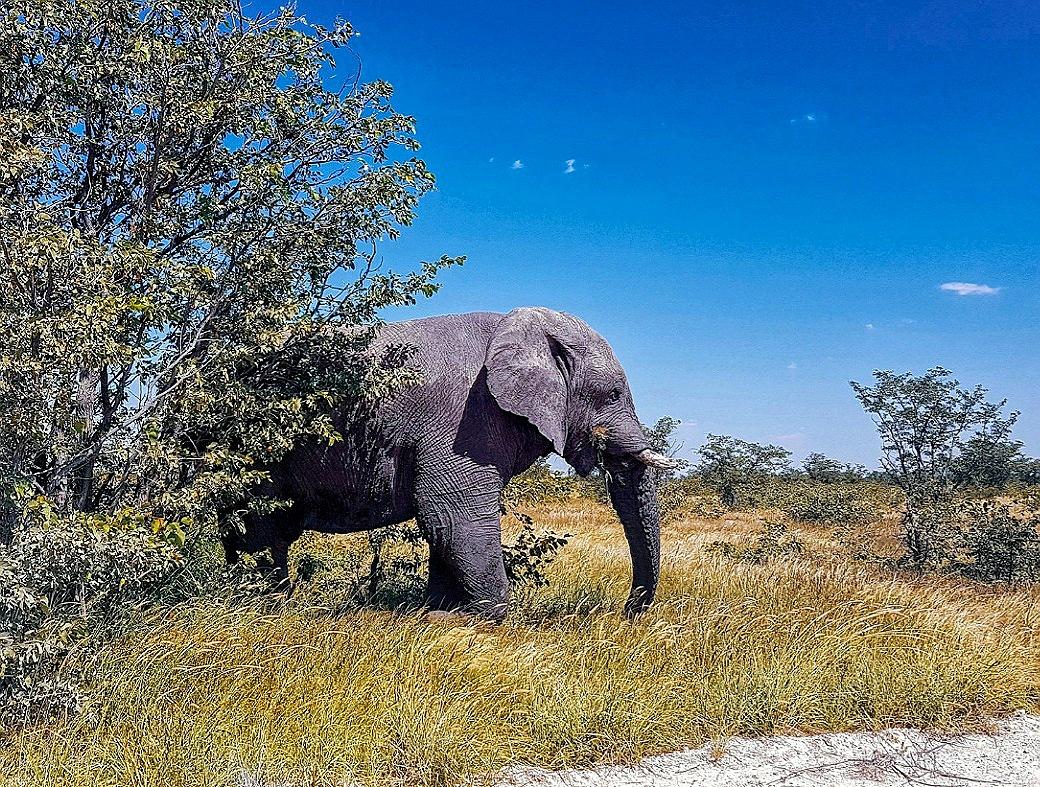 dove andare in vacanza autunno 2020 namibia