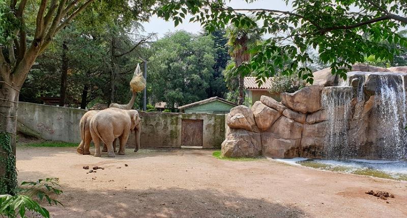 elefanti pinnawala al parco delle cornelle di bergamo