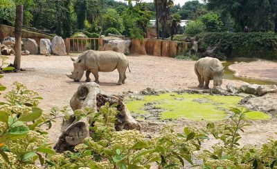 rinoceronte allo zoo di bergamo