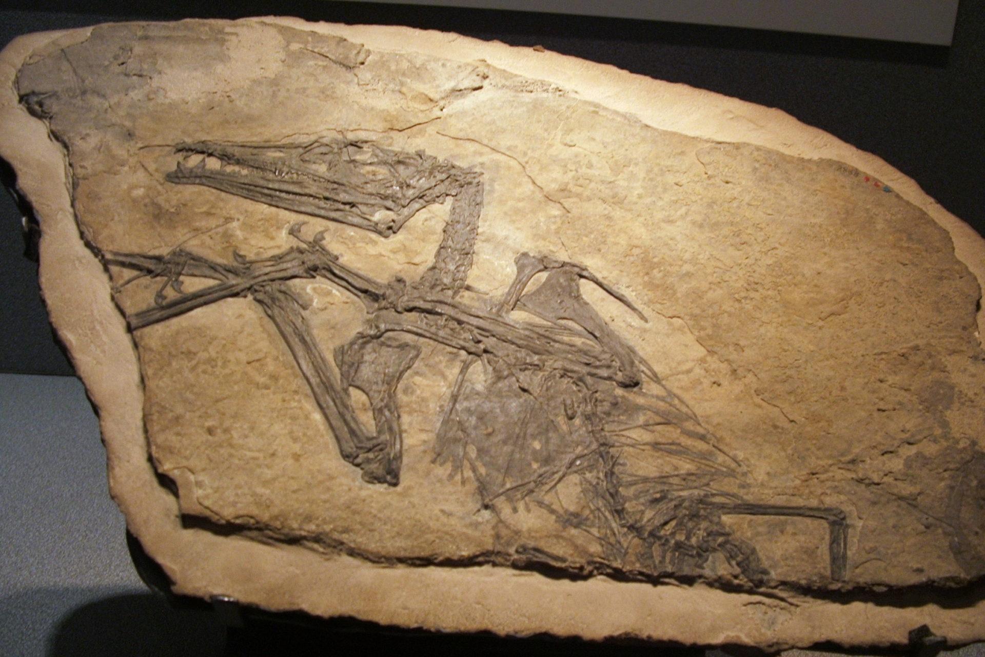parco paleontoligico cene bergamo