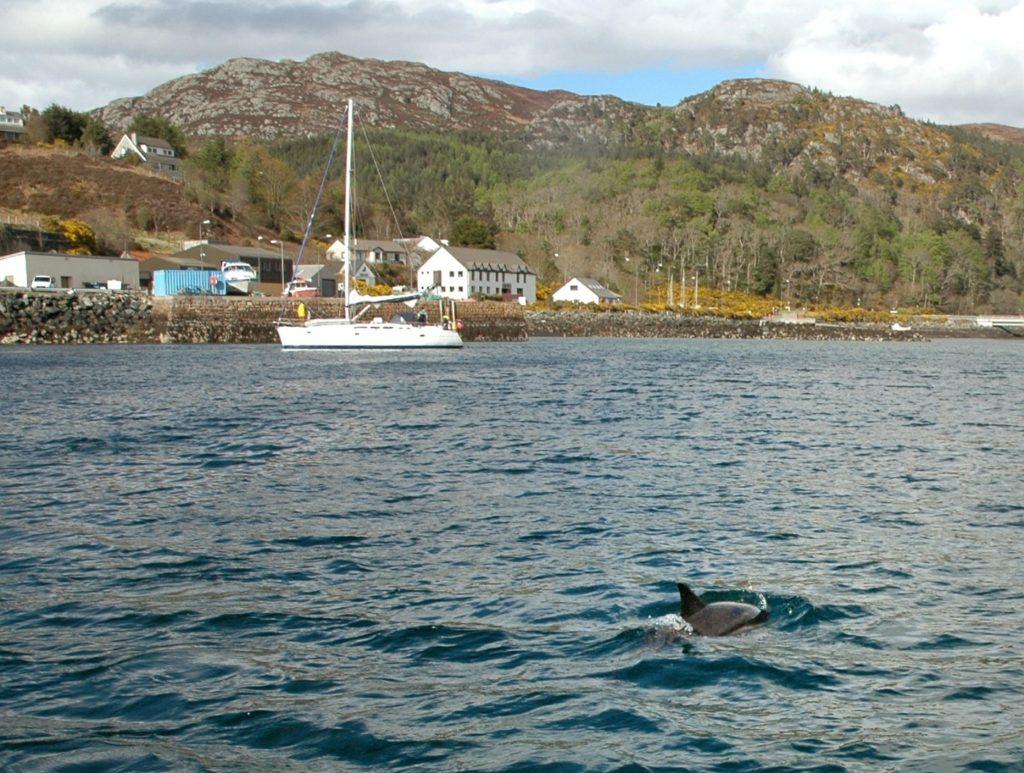 delfini gairloch escursione