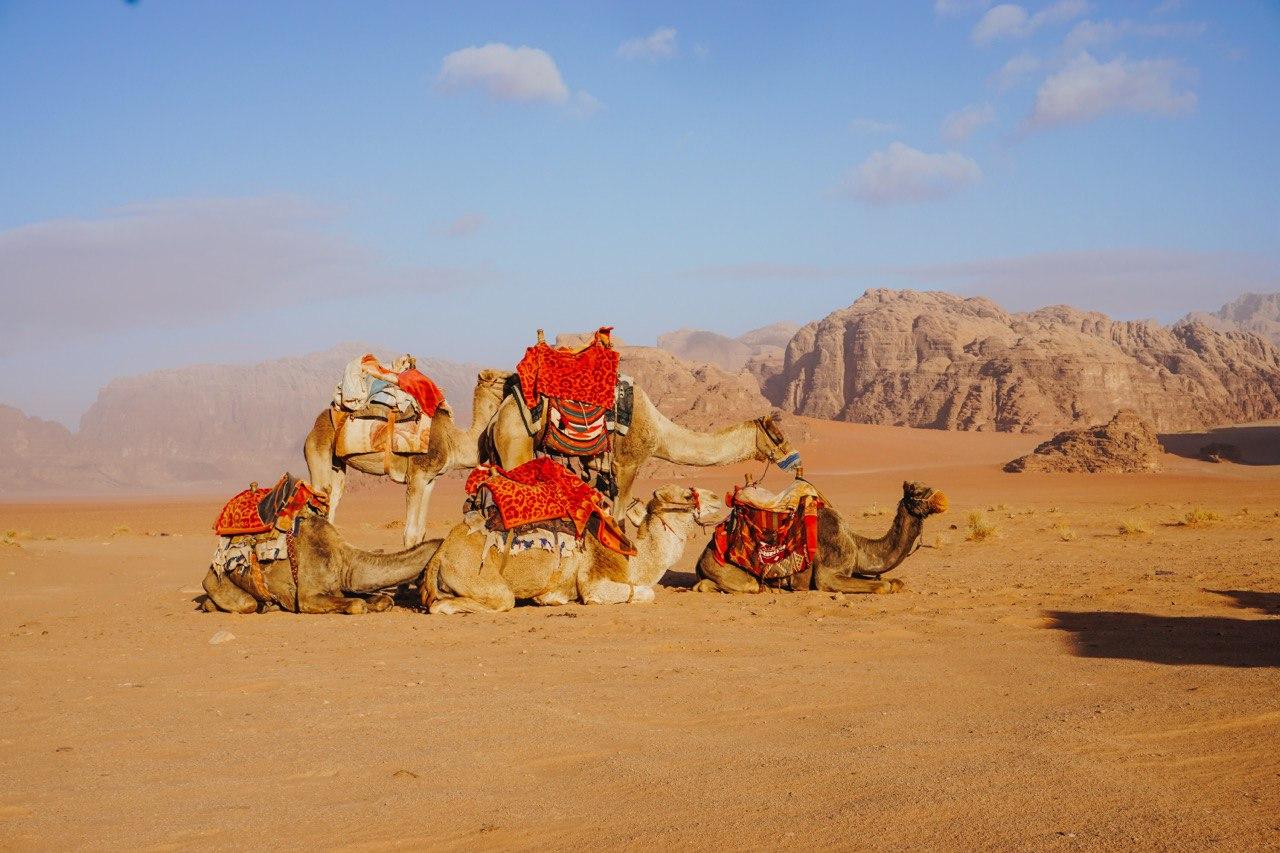 team panannablogdiviaggi - Giordania dromedari deserto