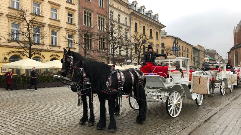 carrozza di cavalli a cracovia