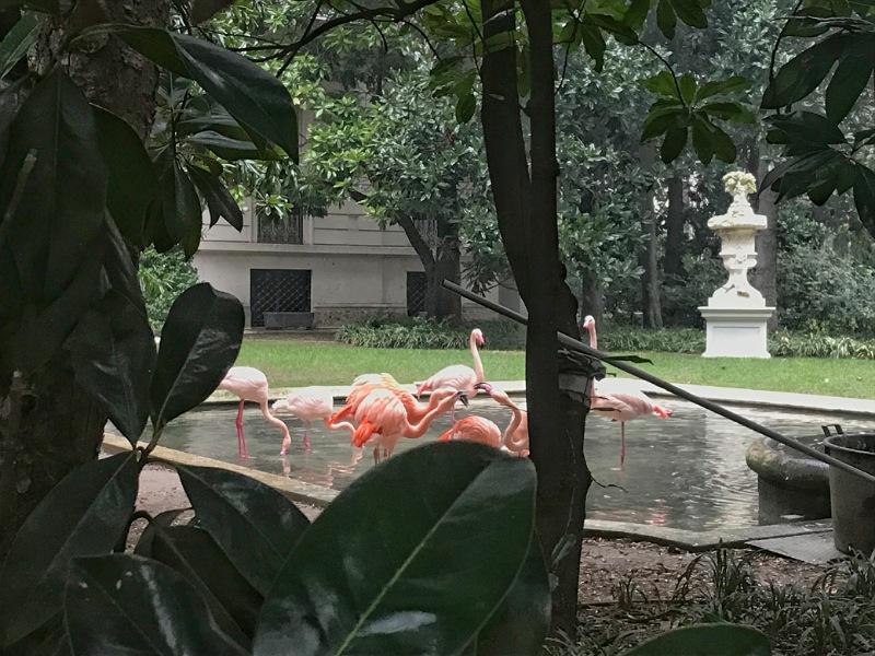 fenicotteri in un parco di milano