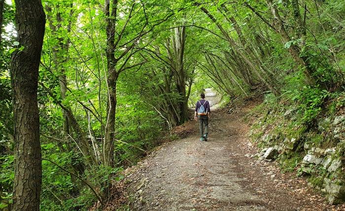 sentiero nel bosco per arrivare alla panchina gigante di fonteno sul lago d'iseo