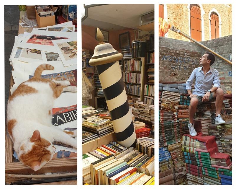 libri e gatti alla libreria acqua alta di venezia